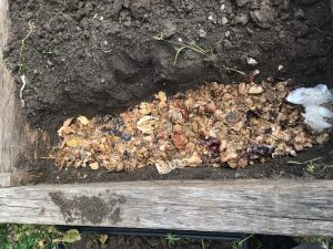 Vegetable bed with thin layer of fermented food waste spread along a trough.
